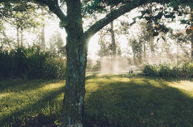 sprinkler-024