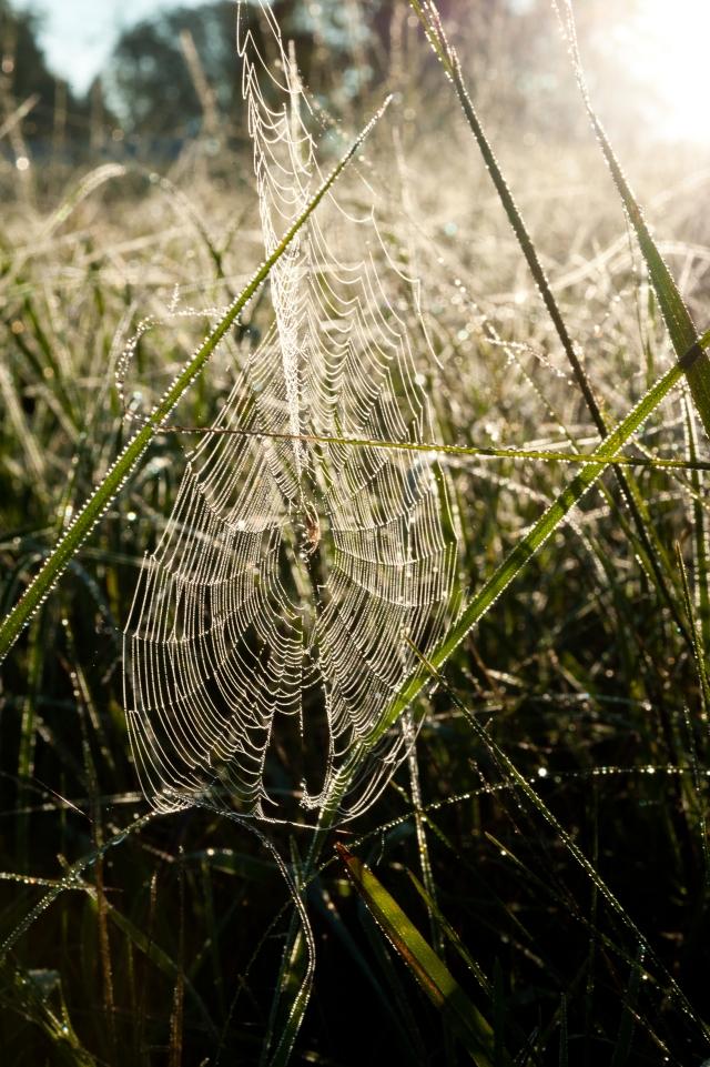 Spiderdew-056